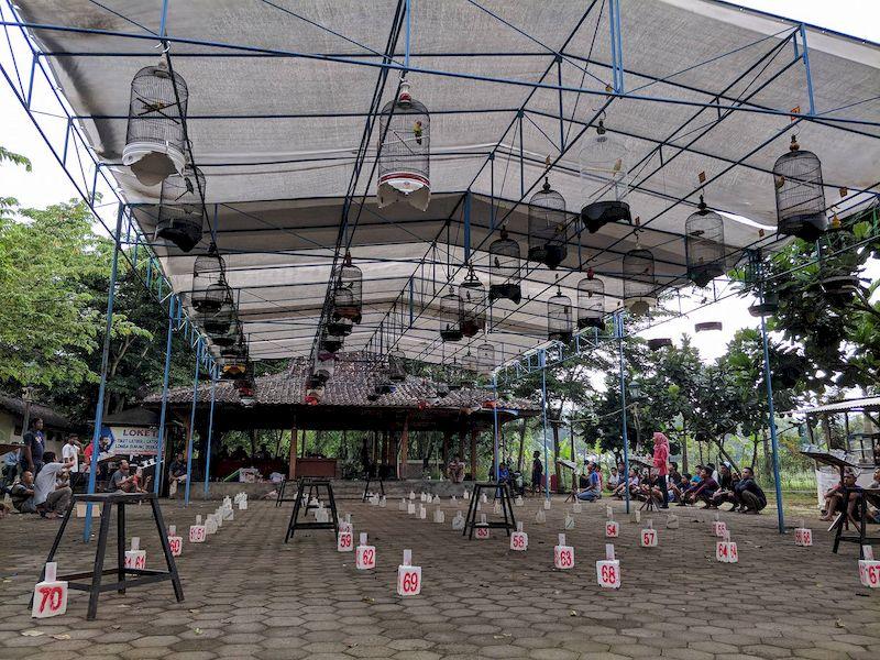 Hasil Latihan Bersama 545 Kontes Burung Berkicau Ponjong Enterprises 3 Maret 2018 (05)